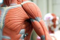 Monitoria de Anatomia - Quarta - Amanhã
