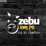 Zebu em Pé